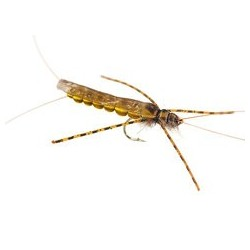 Large Realistic Yellow Stonefly