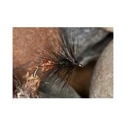 Black and Orange Worm Fly