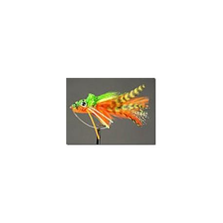 Frog Swimming Orange Belly