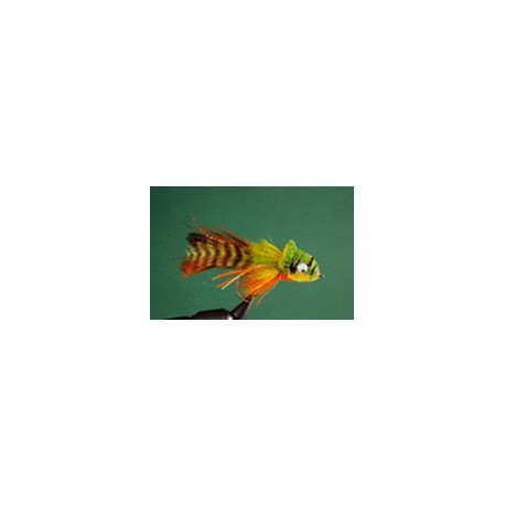 Orange belly umpqua swimming
