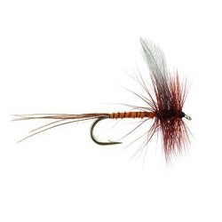 Blue Winged Brown Quill Mayfly