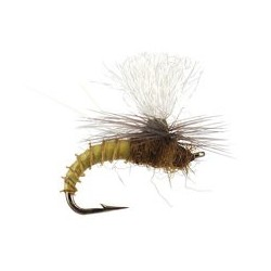 Christiaens GT Adult - BWO